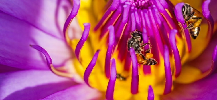 Our bees are being killed by Government plans. Please sign this petition